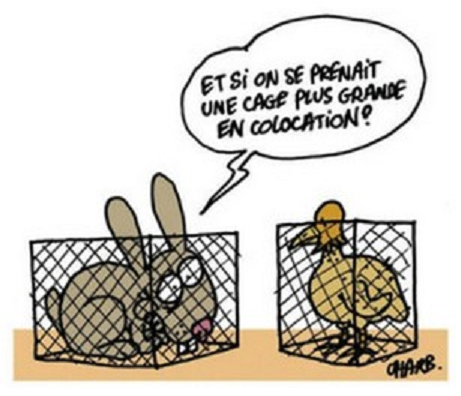 charb animaux labo coloc